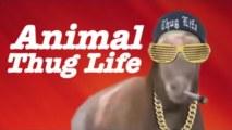 Thug life - zvieratá