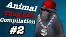 Thug life - zvieratá #2