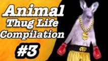 Thug life - zvieratá #3