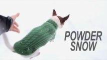 Venčenie malého psa vo veľkom snehu