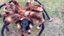 Gigantický pavúk v uliciach mesta
