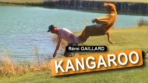 Rémi Gaillard - Kengura